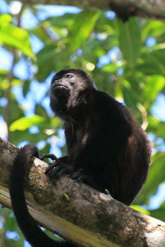 finca los monos2