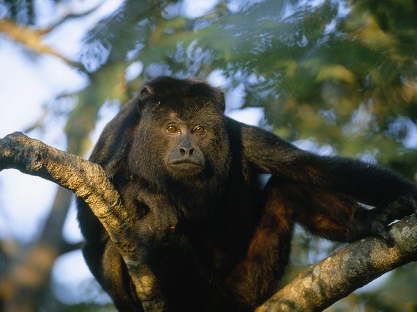 finca los monos3