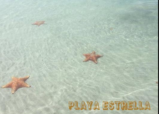 playa estrellas isla colon