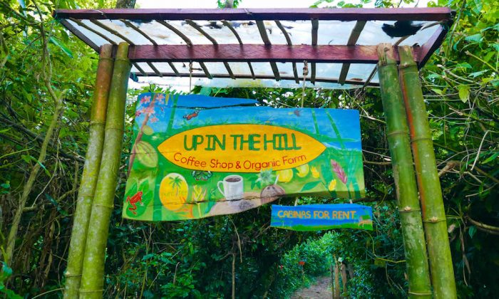 Up in the hill Organic Farm 2