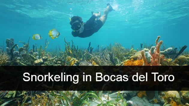 snorkeling in Bocas del Toro (1)